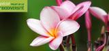 Loi biodiversité : les sénateurs autorisent la ratification du protocole de Nagoya