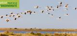 Le Sénat donne une base juridique à la compensation des atteintes à la biodiversité