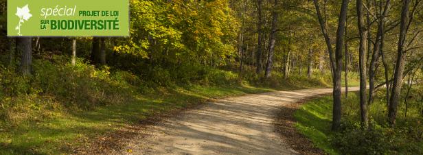 Loi biodiversité : mettre un terme à la disparition silencieuse des chemins ruraux