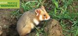 Biodiversité : trop d'outils de protection affaiblissent la protection