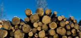 Bois : l'Ademe présente son scénario pour accroître l'utilisation de la ressource française