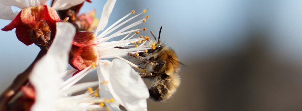Pollinisateurs : le Giec de la biodiversité tire la sonnette d'alarme