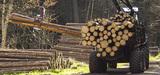 Le nouveau contrat d'objectifs de l'ONF garantit-il un développement durable de la forêt publique ?