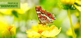 Pesticides n�onicotino�des : schizophr�nie en France et en Europe
