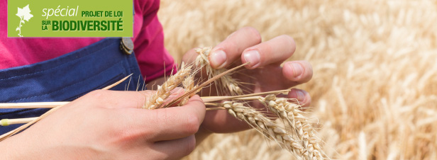 Semences paysannes : feu vert de l'Assemblée à une ouverture plus large des échanges