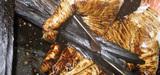 La Cour de cassation reconnaît le préjudice écologique causé par Total à Donges