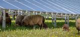 Centrales photovoltaïques au sol : comment limiter les conflits d'usage