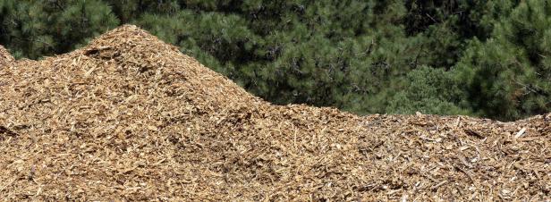 Le Gouvernement lance l'élaboration de la stratégie nationale de mobilisation de la biomasse