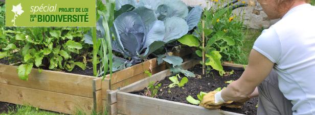 Le Sénat clarifie la législation applicable à l'échange de semences entre jardiniers amateurs