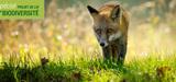 Loi biodiversit�: ce qui va faire d�bat entre le S�nat et l´Assembl�e