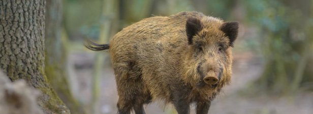 Biodiversité et chasse : la mutualisation des services se précise