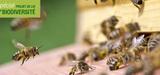 Les pesticides n�onicotino�des seront interdits progressivement entre 2018 et 2020