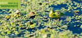 """Les députés inscrivent l'objectif de """"zéro perte nette de biodiversité"""" dans le code de l'environnement"""