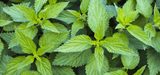 Pesticides : les industriels s'accaparent-ils le marché des produits alternatifs ?