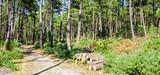 Le programme national de la forêt et du bois ne respecte pas complètement le code de l'environnement