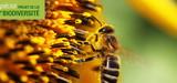 Loi biodiversit�: le S�nat apporte sa derni�re touche