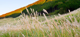 La Commission européenne propose une feuille de route climatique flexible à l'horizon 2030