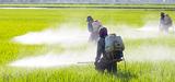 Pesticides: le manque de données alerte l´Anses