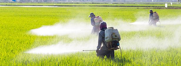 Pesticides : le manque de données alerte l'Anses