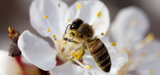Loi biodiversit�: le Conseil constitutionnel valide l´interdiction des pesticides n�onicotino�des