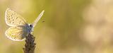 La loi sur la biodiversité est publiée au Journal officiel