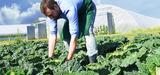 L'agriculture Bio nécessite un accompagnement de l'ensemble de la chaîne de production