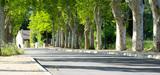 La loi biodiversité consacre la protection des allées d´arbres au bord des routes