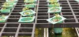 La loi biodiversité limite timidement la brevetabilité du vivant