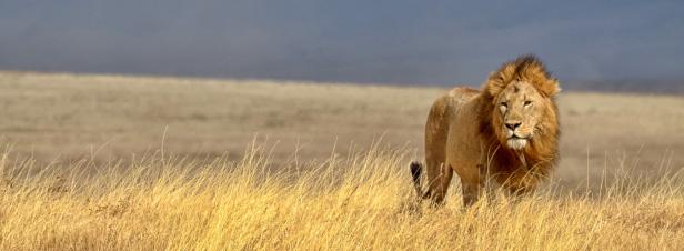 La communauté internationale échoue à renforcer la protection des éléphants et des lions d'Afrique