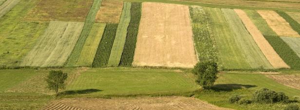 Des pistes pour mieux rémunérer les services environnementaux fournis par l'agriculture