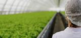 Agriculture: l'Inra actualise son programme de recherche