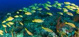 De nouvelles zones dédiées à la conservation des ressources halieutiques