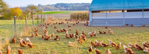 Agriculture bio : les défis à relever face à la croissance
