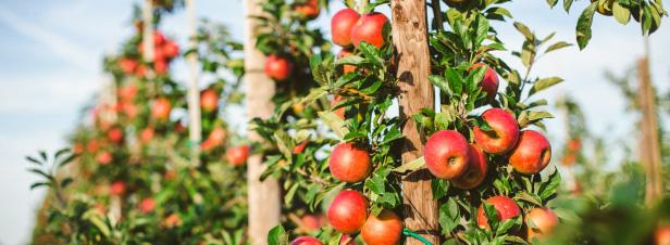La transition agroécologique nécessite un changement global du système agricole français