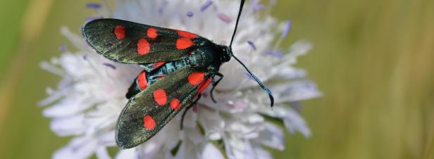 L'inquiétant déclin des papillons témoigne des atteintes toujours plus graves à la biodiversité
