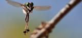 Les données des études d´impact sur la biodiversité seront bientôt en libre accès