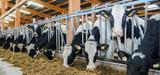 Le Gouvernement allège à nouveau la réglementation applicable aux élevages