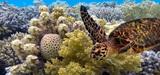 Biodiversité : l'ONU salue les engagements des Etats