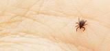Les atteintes à l'environnement expliqueraient la hausse des maladies transmises par les tiques