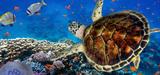 Ségolène Royal dévoile la feuille de route de l'Agence française pour la biodiversité