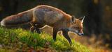 """La loi biodiversité révèle l'évolution de notre perception vis-à-vis de l'animal """"nuisible"""""""