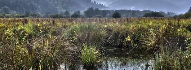Législation européenne : la France doit progresser sur l'air, la biodiversité et l'eau