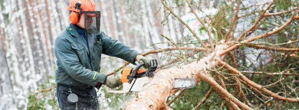Le programme national de la forêt et du bois 2016-2026 est adopté