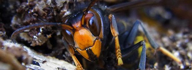 Des chercheurs internationaux alertent sur l'introduction continue des espèces exotiques