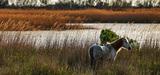 Un décret vient faciliter la réalisation de travaux dans les réserves naturelles