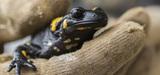 Programmes présidentiels: et la biodiversité dans tout ça?