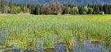 Le Conseil d'Etat remet en cause la définition des zones humides