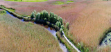 Sites naturels de compensation : les opérateurs redoublent de prudence