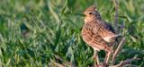 Biodiversité : un phénomène d'uniformisation des communautés d'oiseaux est enclenché