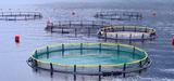 La relance de l'aquaculture française passera par la reconquête des écosystèmes aquatiques